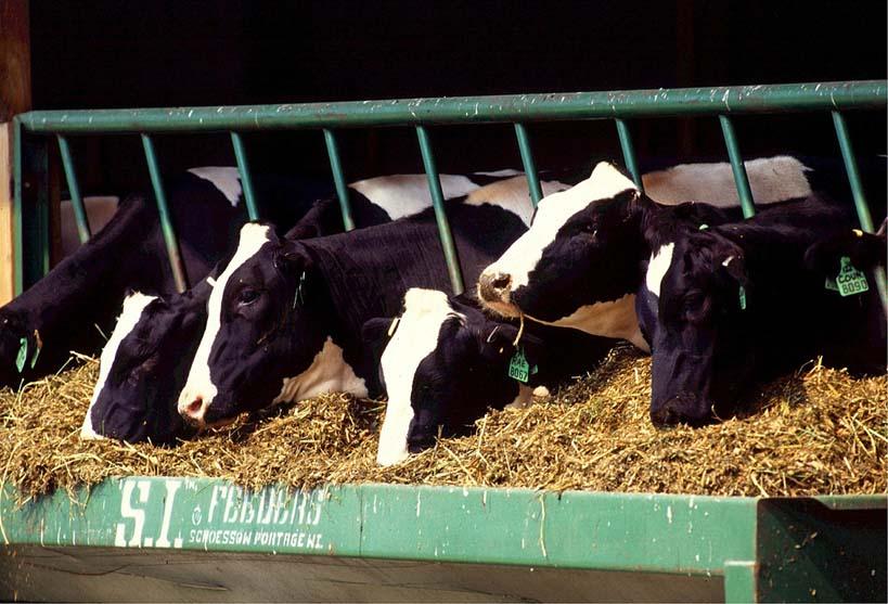 vlees slecht voor het milieu koeien